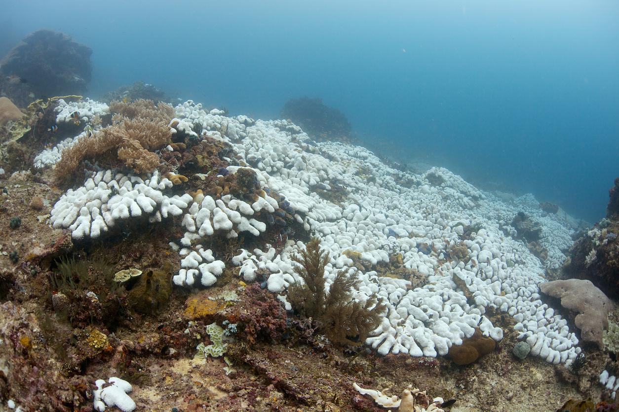 Coral-bleaching